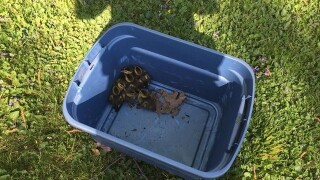 ADORABLE ducklings saved from storm drain in Bargersville