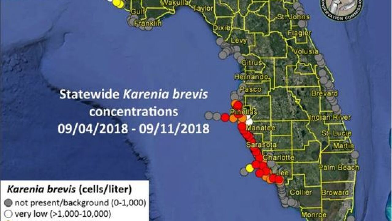 Red tide persisting from Lee County up to Pinellas County