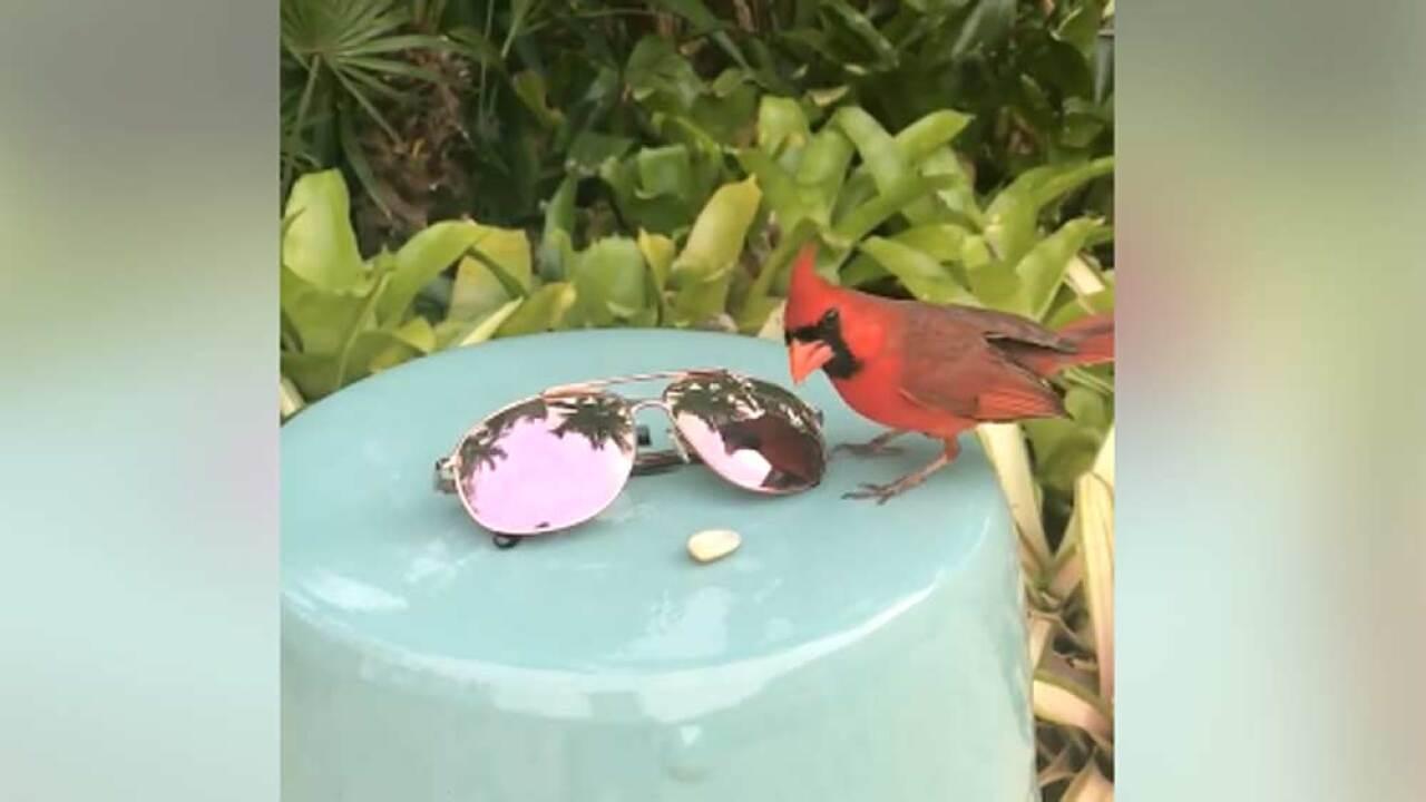 wptv-jupiter-cardinal.jpg