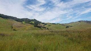 andrea montes johnson ranch.jpg