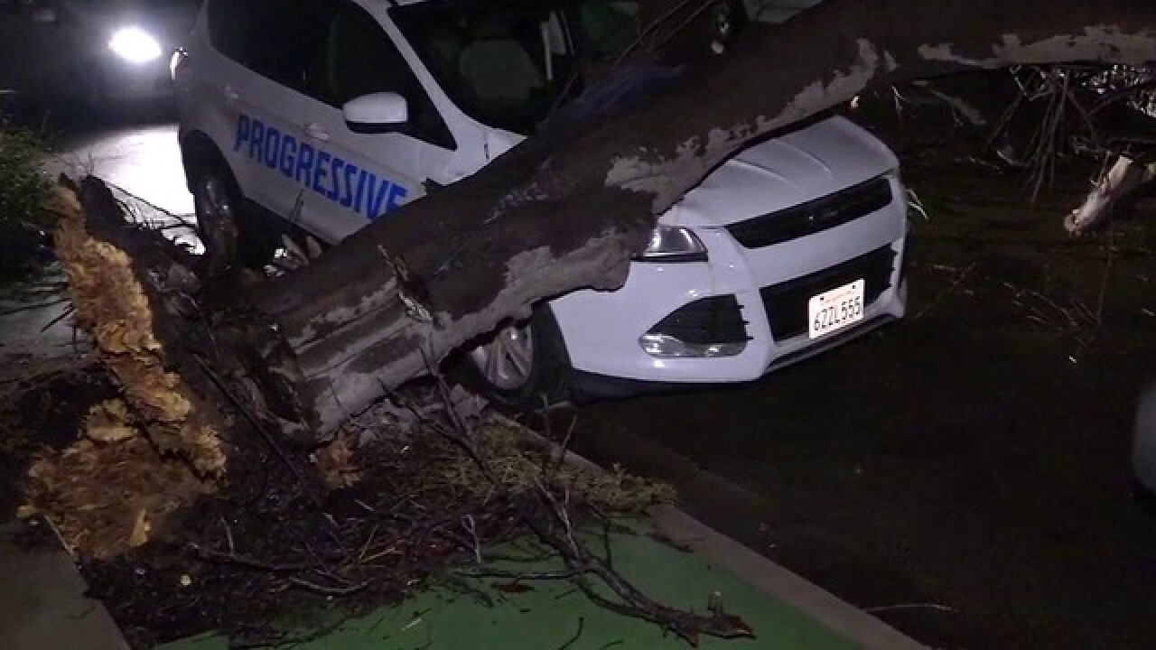 Got insurance? Trees topple overnight