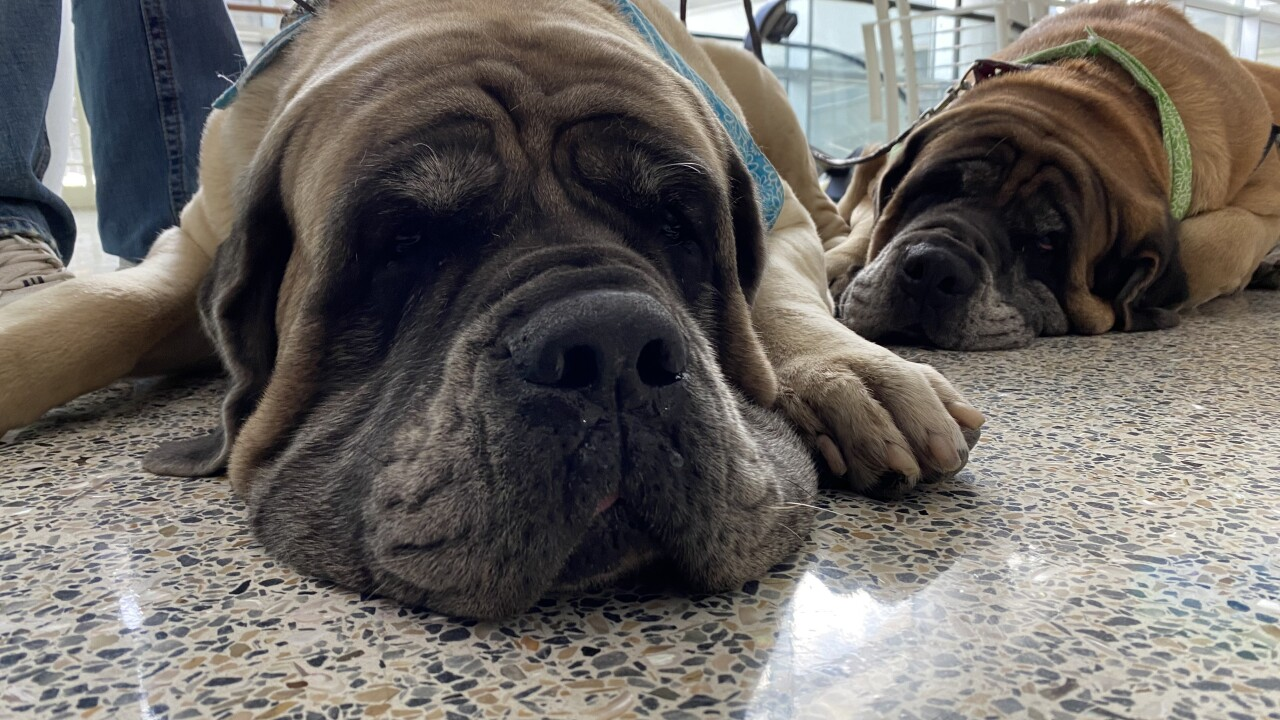 Dogs at airport.jpeg