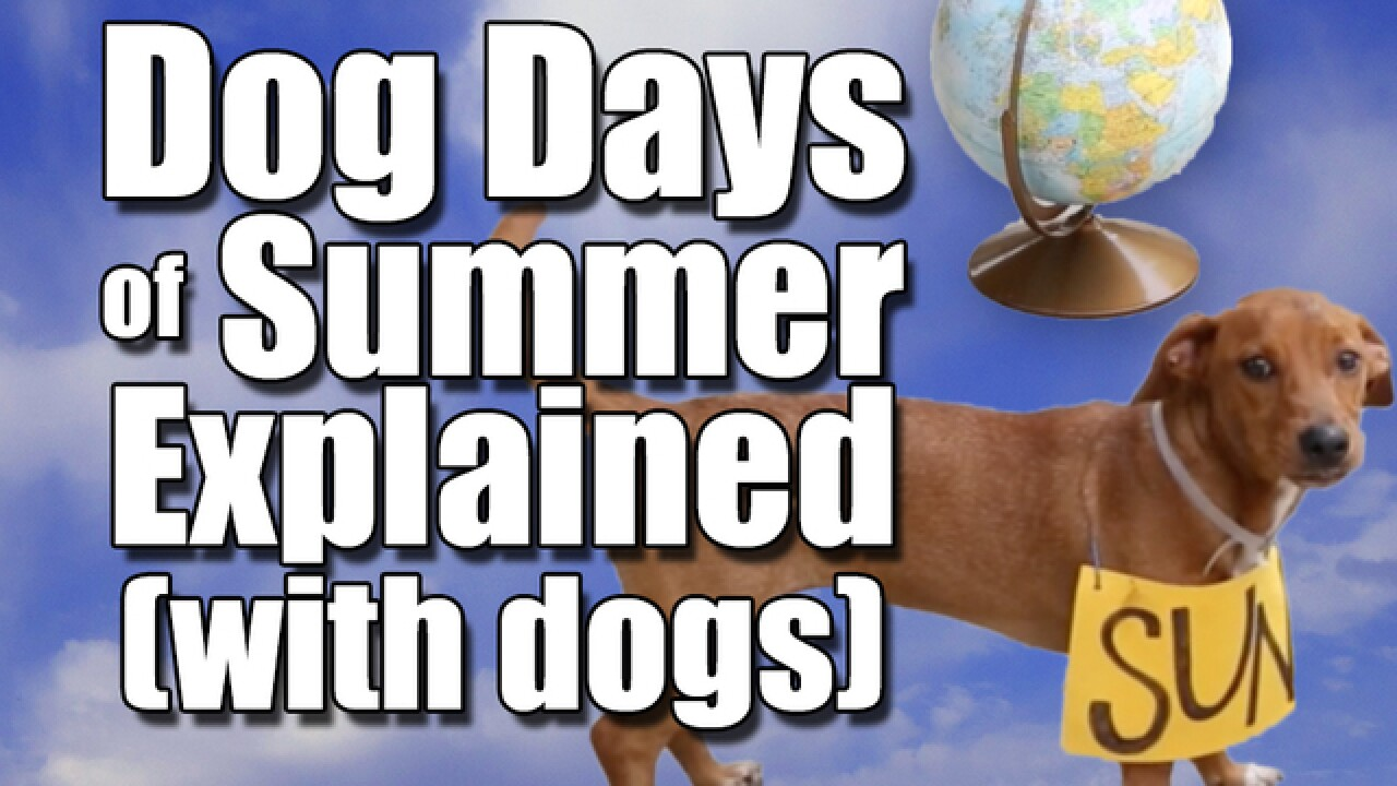 Dog days of summer explained (with actual dogs)