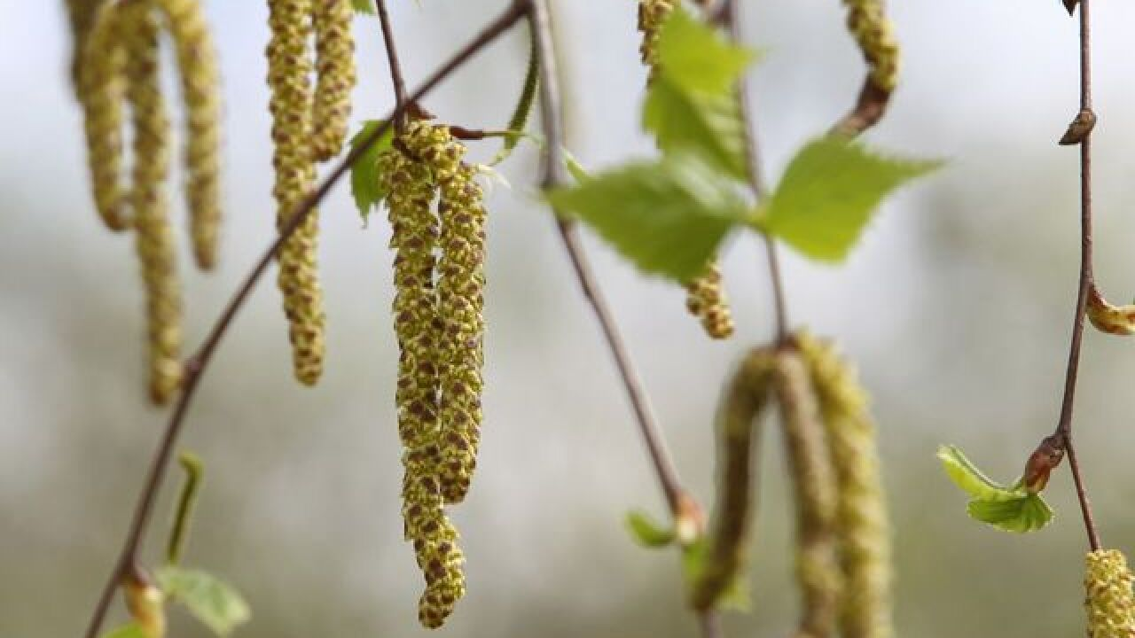 Are you always sad in the spring? Allergy-mood link is real