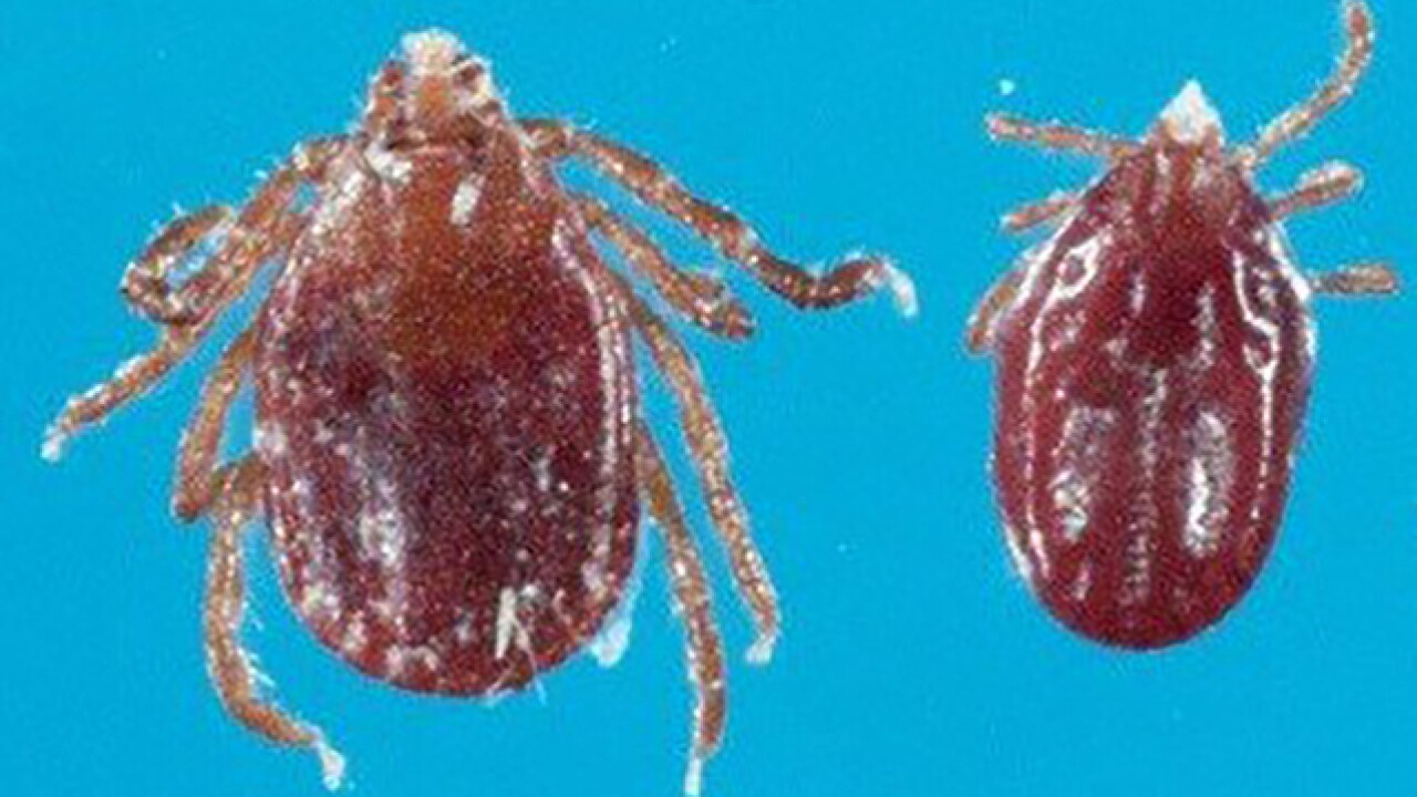 Invasive East Asian tick confirmed in Maryland