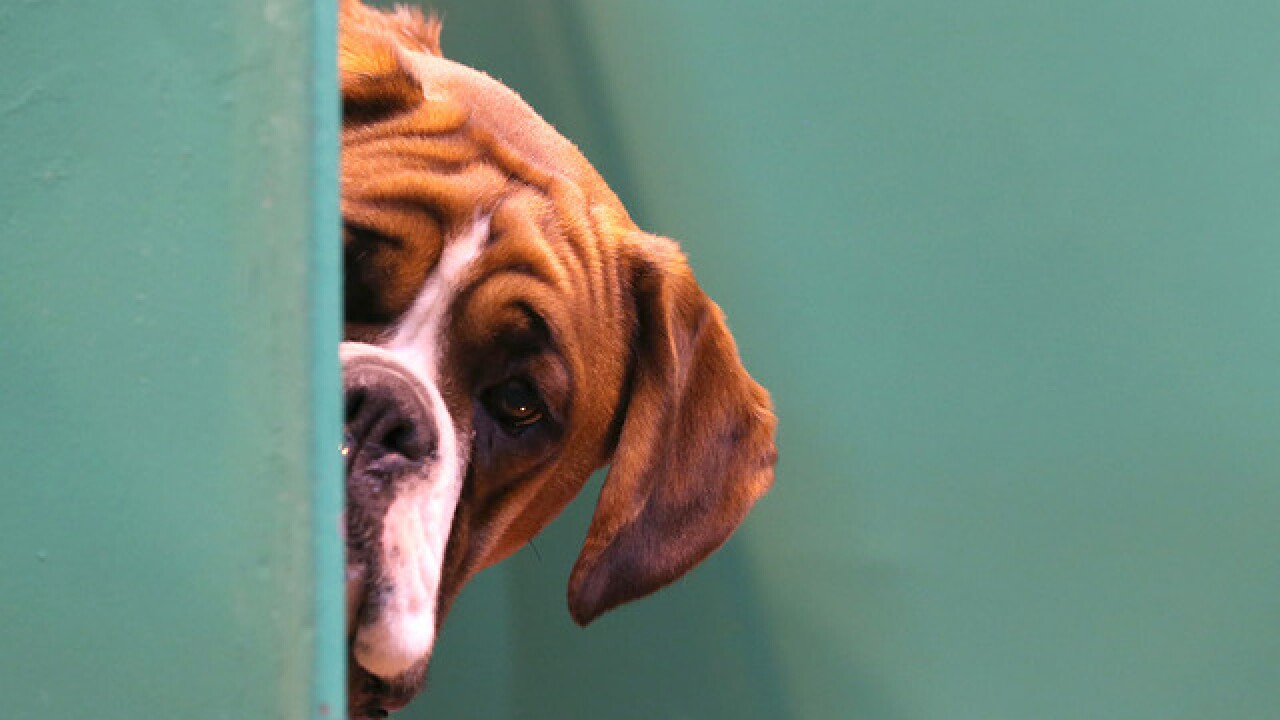 QUIZ: Can you identify these popular dog breeds?