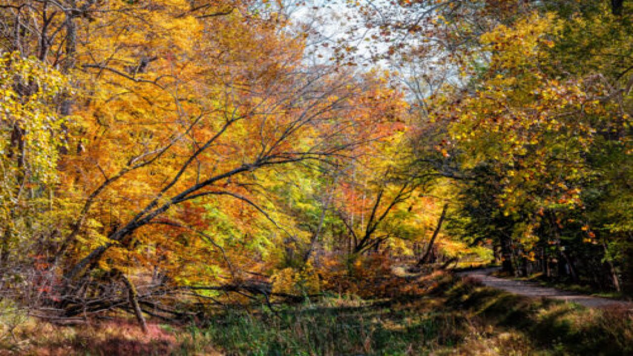 Fall Foliage Will Peak Two Weeks Later Than Usual This Year