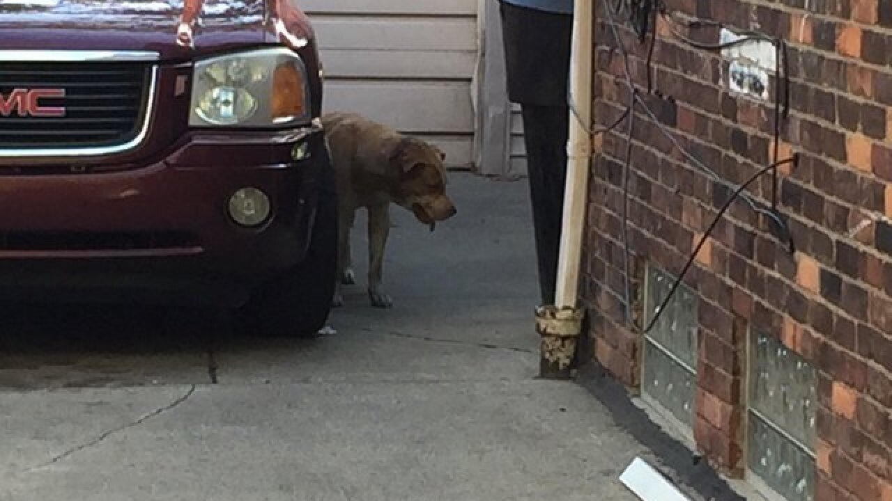 Dog returns home injured after being stolen