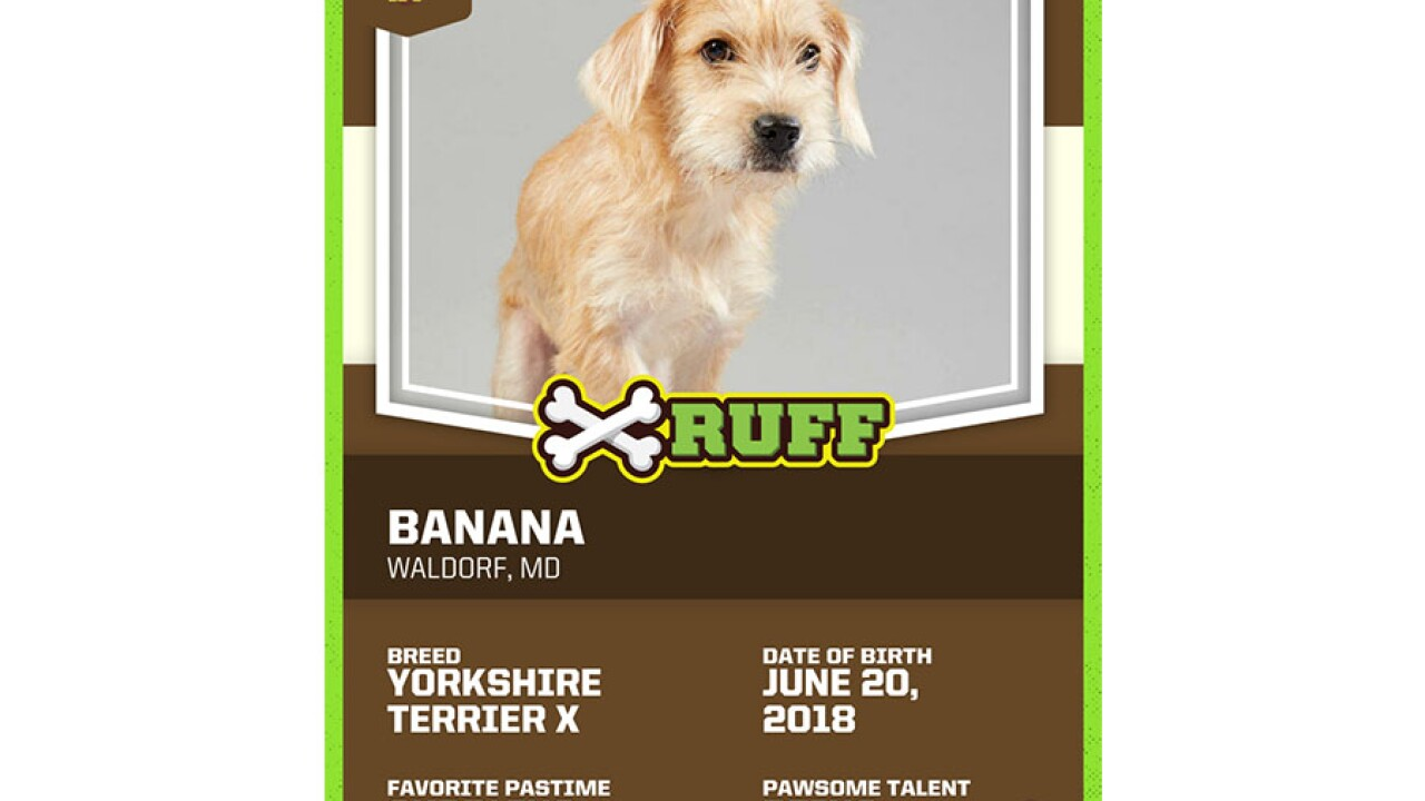 banana trading card.jpg