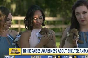 Wedding puppies! Florida couple uses big day to encourage others to adopt, don't shop