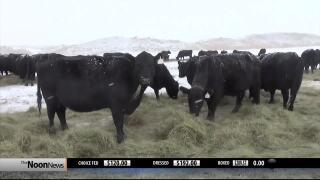 Montana Ag Network report for Friday, December 20