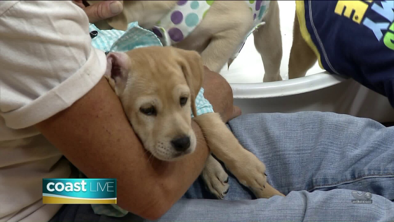 Getting ready for Dog Day at Ocean Breeze Waterpark with a puppy pool party on Coast Live