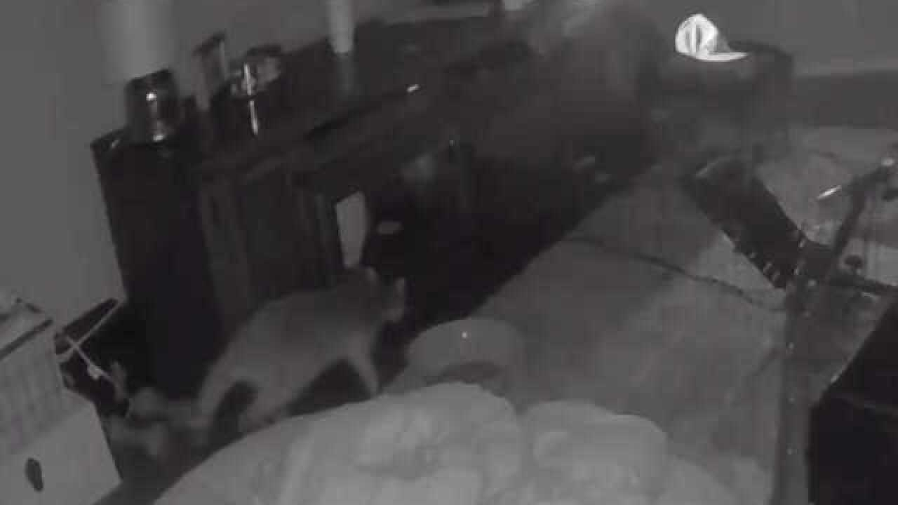 Raccoon uses doggy door to enter Glendale home (VIDEO)