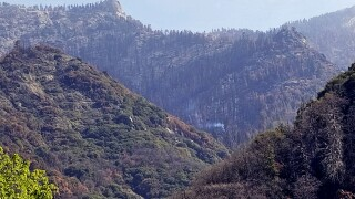 California Wildfires Redwoods Killed