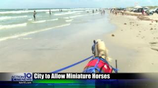 City retracts decision, allowing elderly couple to offer free miniature horse rides on the beach