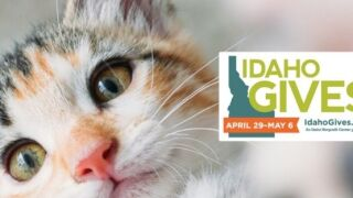 Happy Jacks Cats/ Idaho Gives