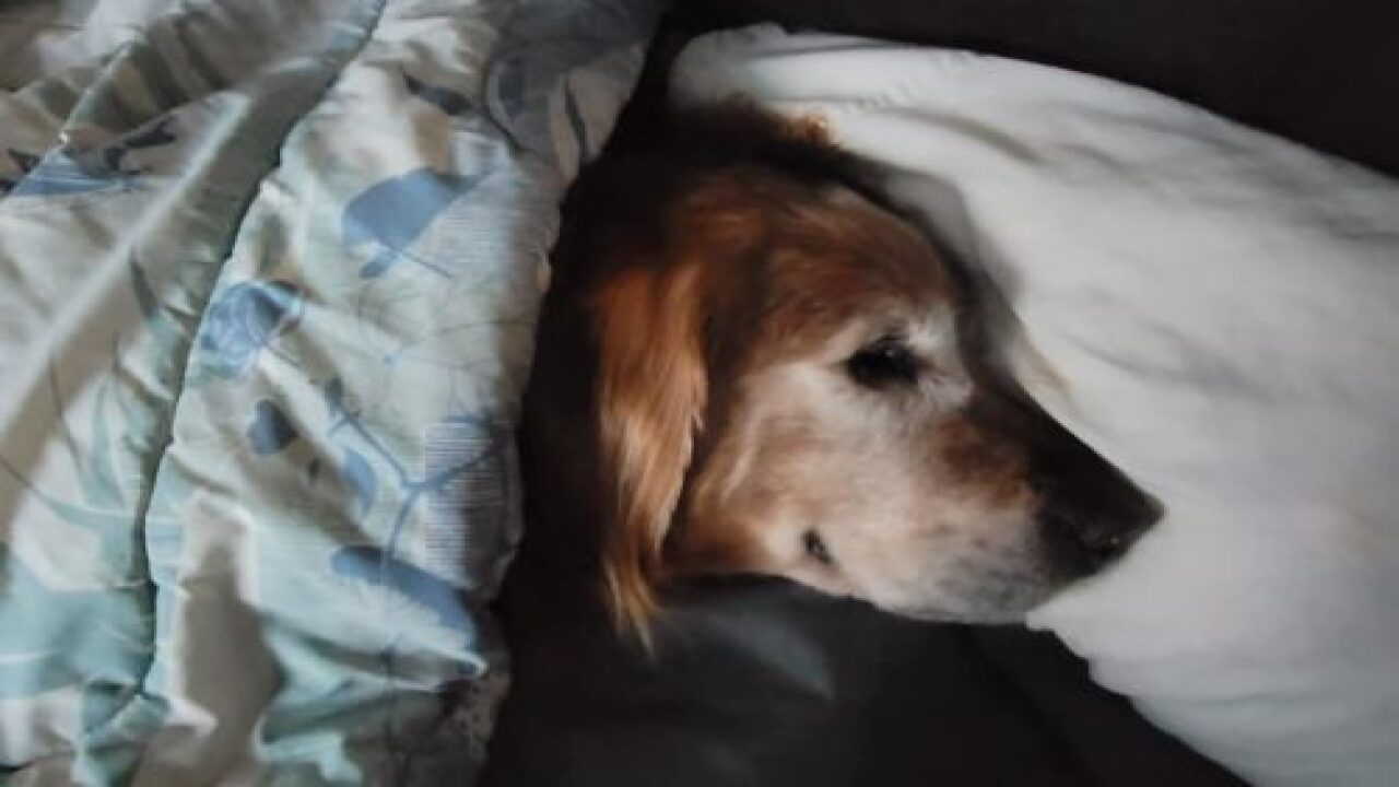 Island Community Residents Came Together To Find Beloved Senior Dog