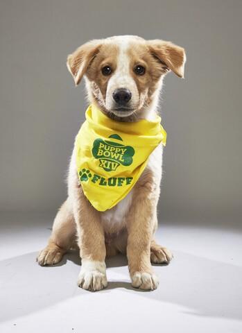 2018 Animal Planet Puppy Bowl XIV: Meet this year's starting lineup