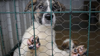 Romania Animal Shelter