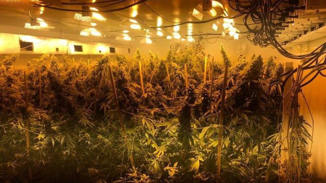 Over 60 marijuana plants found in Punta Gorda
