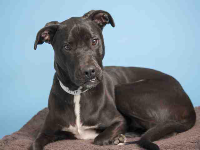 Adoptable pets from Arizona Humane Society and Maricopa County Animal Care (4/25)