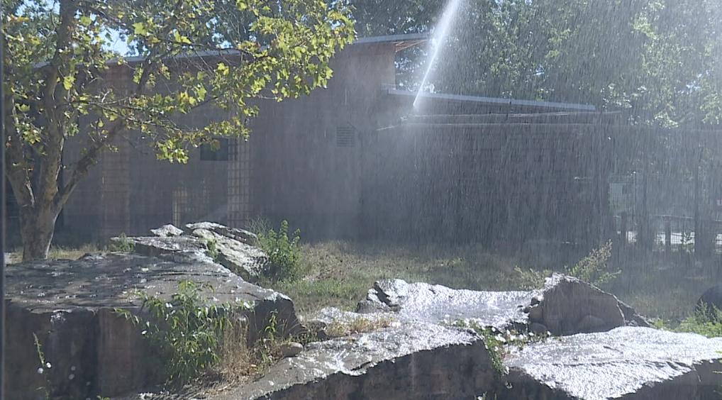Zoo Boise heatwave