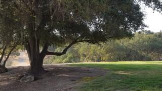 Paso Robles Oak