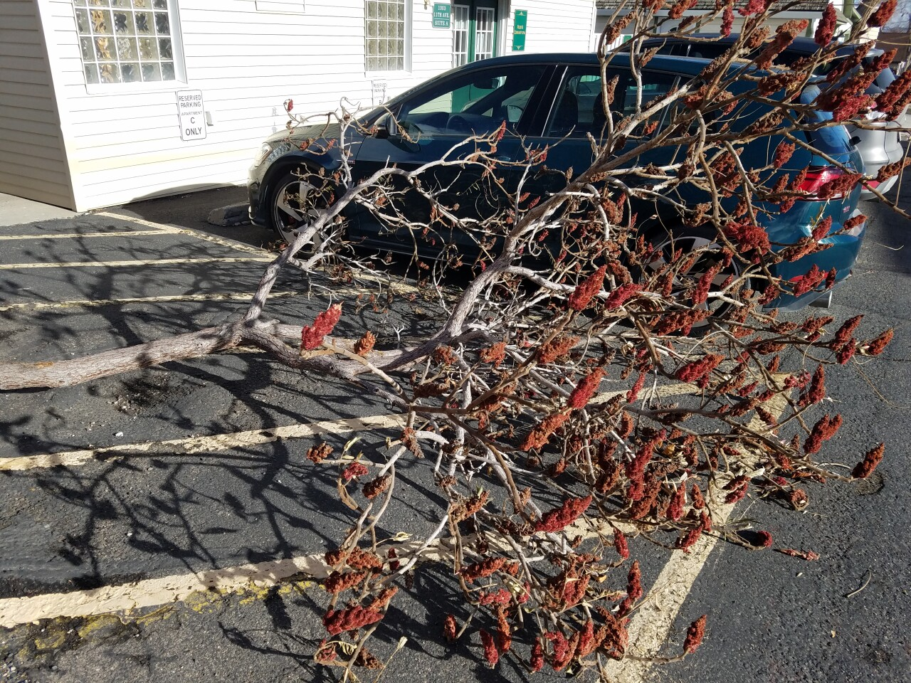 Branch narrowly misses car falling from strong winds