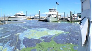 Algae at Pahokee Marina on April 30, 2021