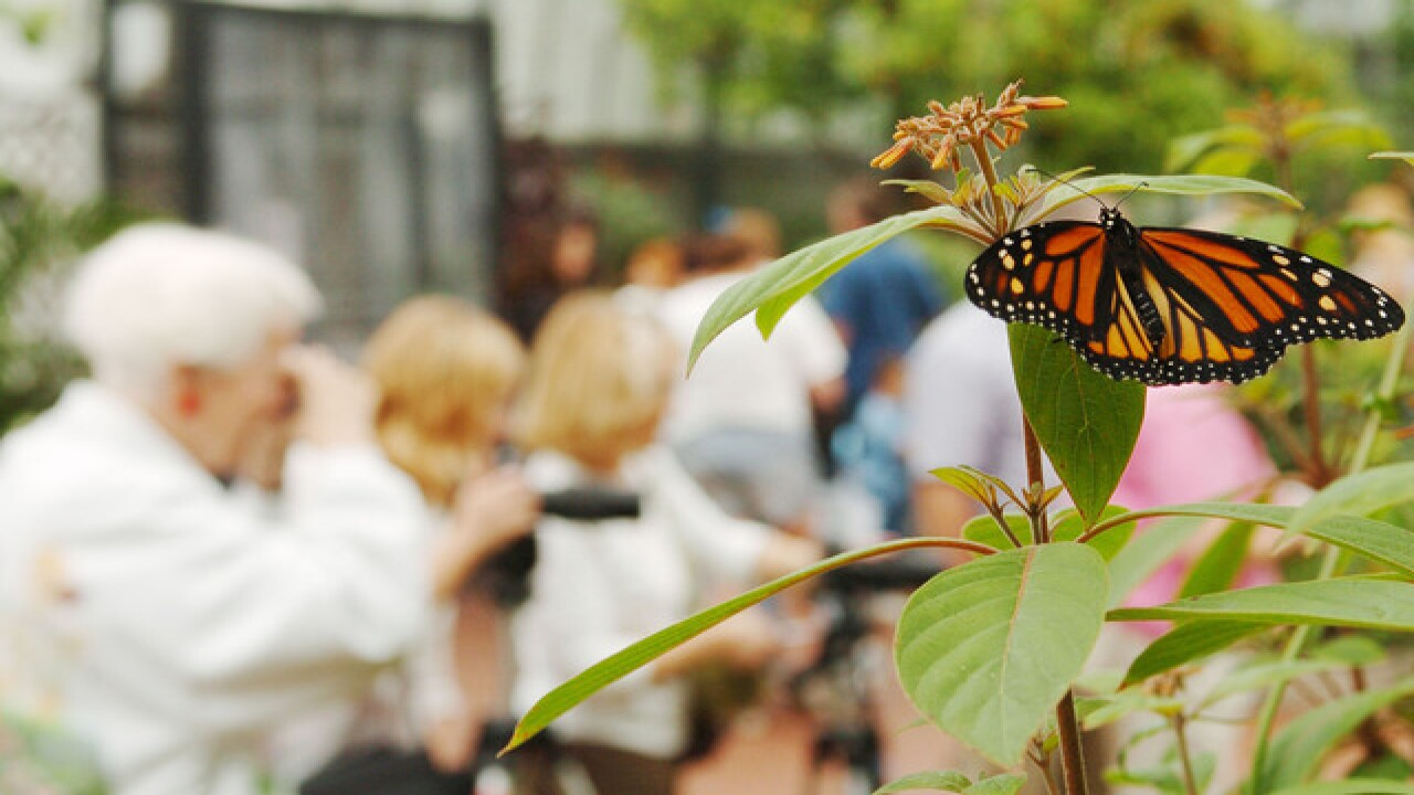 Butterfly migration passes through Cleveland