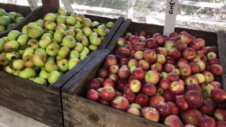 Central Coast Living: Taste and pick apples near Avila Beach