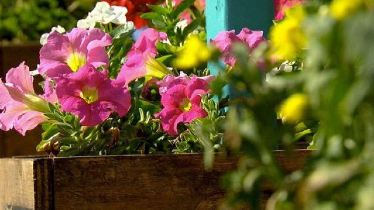 Maricopa County probation agency hopes gardening program will help kids grow