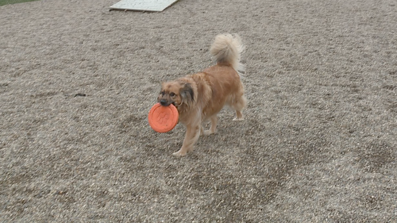 Dog parks report