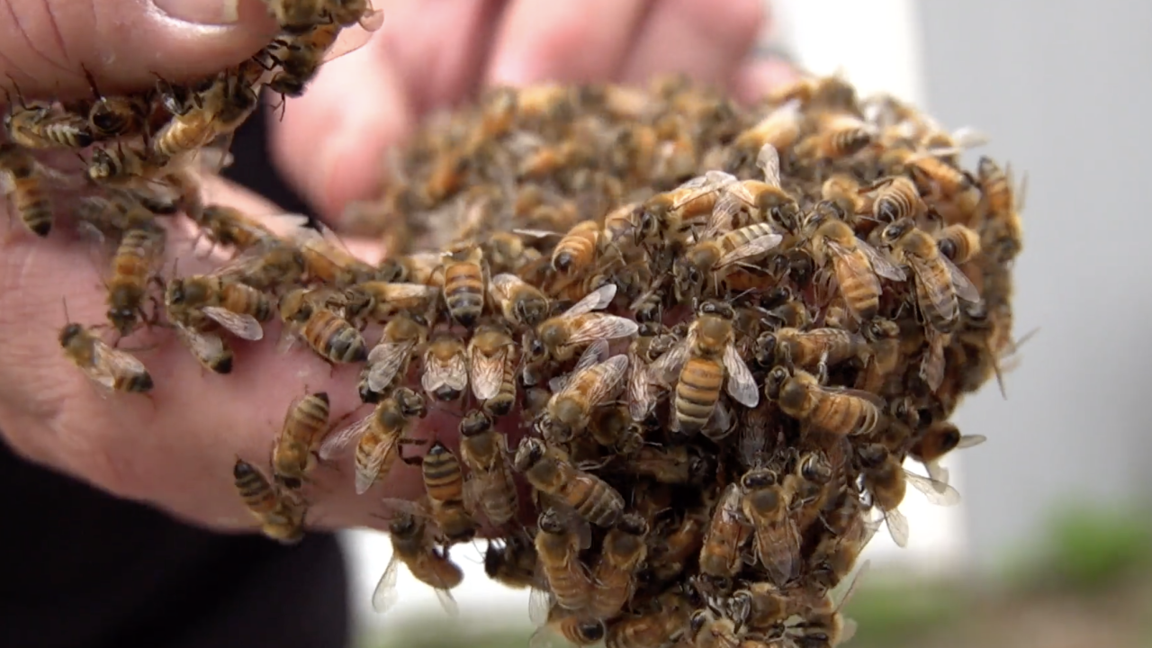 Several years after the invasive Asian lanternfly landed in the Philadelphia region, beekeepers began to notice something unusual was happening with the honey produced by their bees.