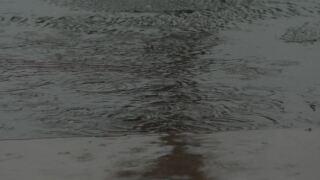 rain puddle.JPG