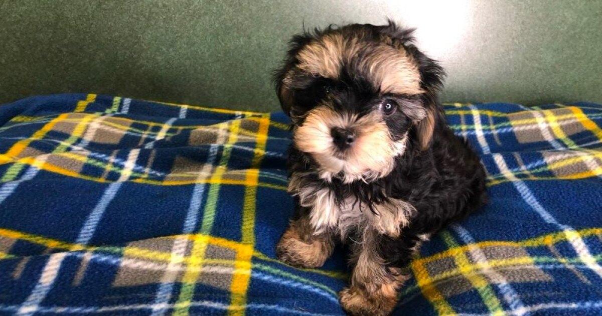 Stolen Fairfield puppy returned safe after a ruff 24 hours