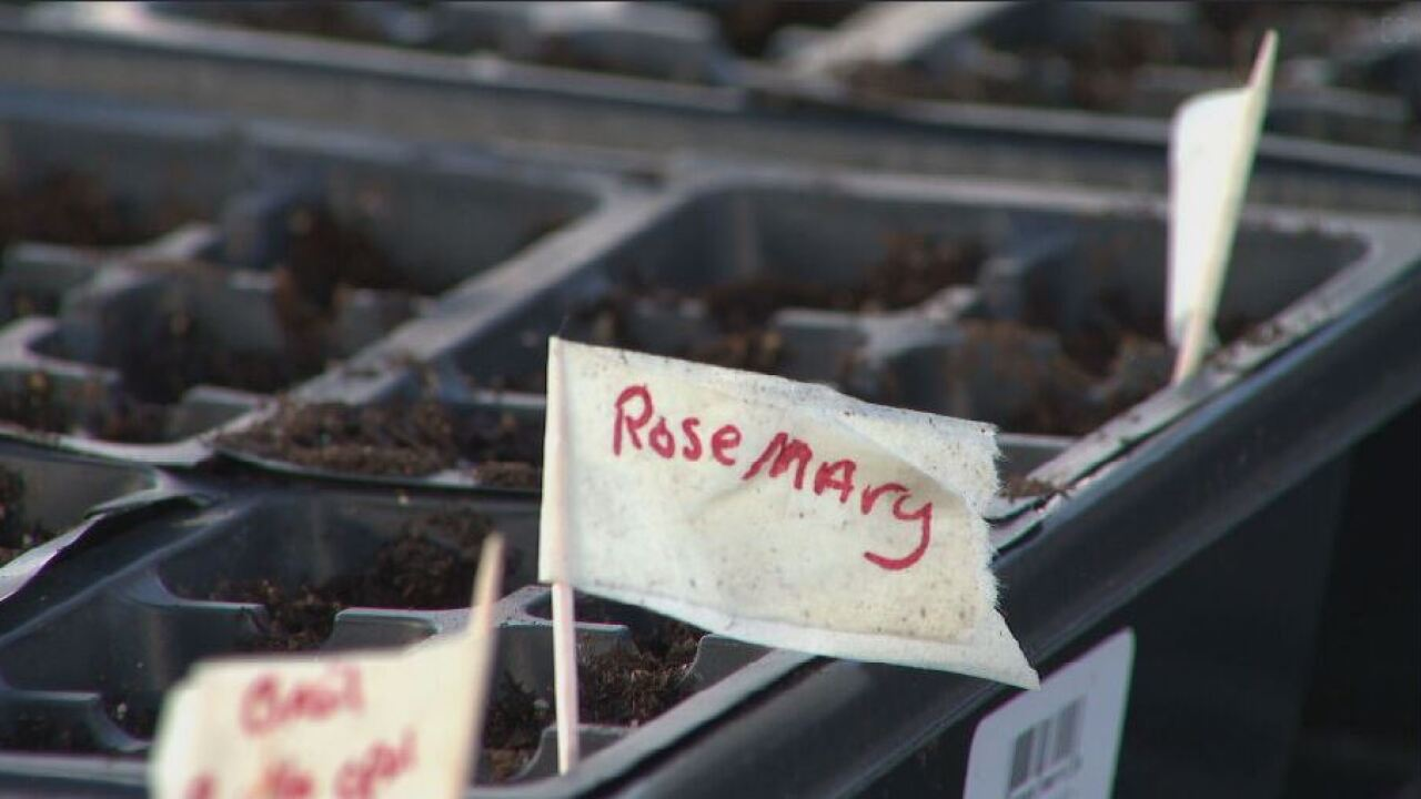 Davidson County Sheriff's Office horticulture program for inmates