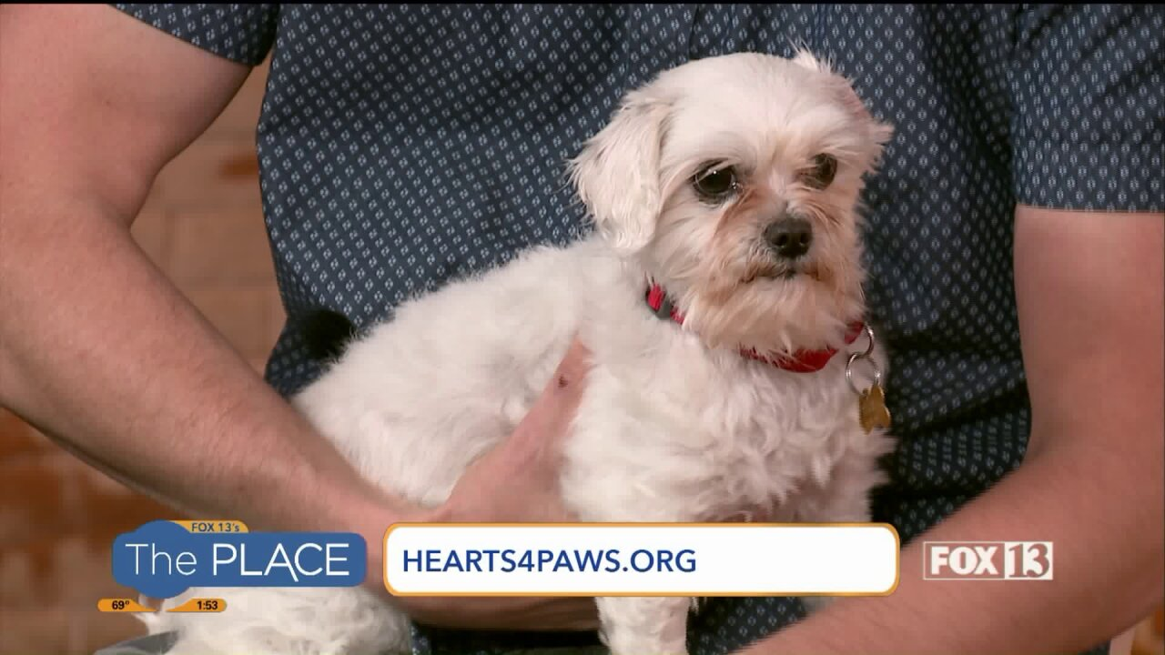 Change Baby's story of neglect by adopting this 'sweetheart' of aShihtzu!