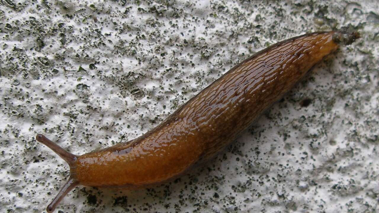 Small slug throws Japan's high-speed rail into chaos