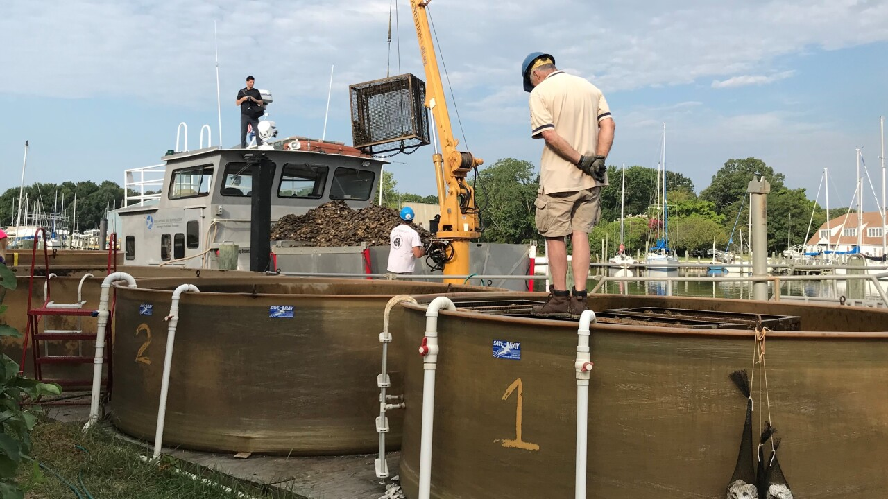Oysters being loaded.jpg