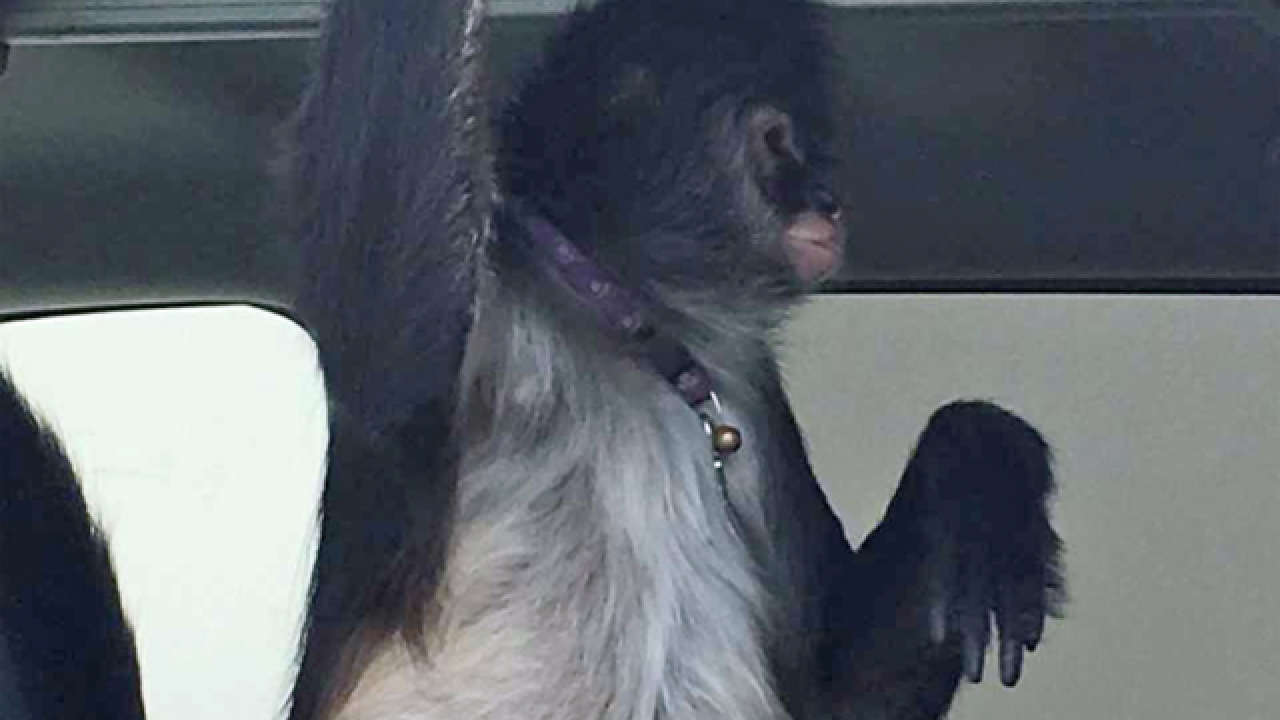 Owner of monkey accused of biting a Home Depot worker arrested out of state