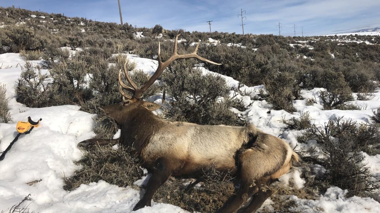 thumbnail_Trophy Bull Elk near Bitner Road.jpg