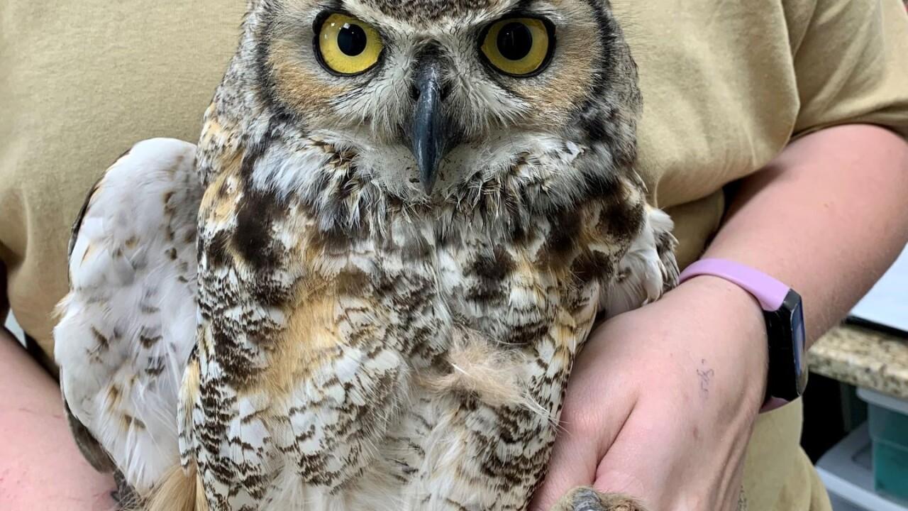 owl1web.jpeg