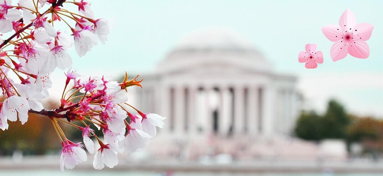 CherryBlossoms_NationalCherryBlossomFestival.jpg