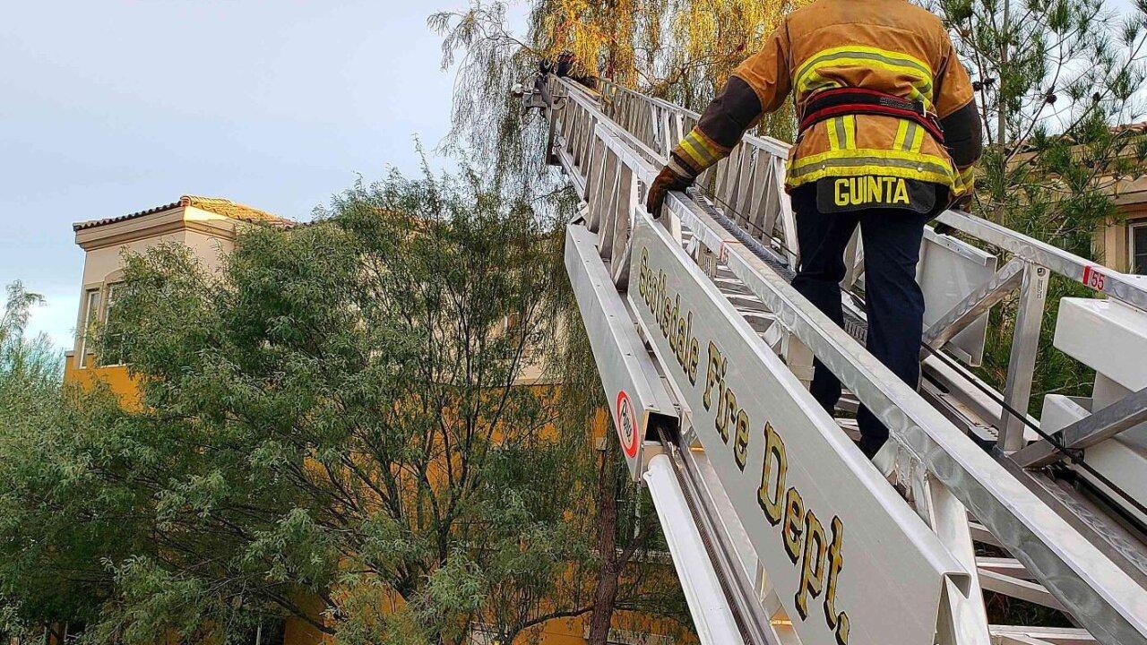 Scottsdale FD rescue cat stuck in tree 2