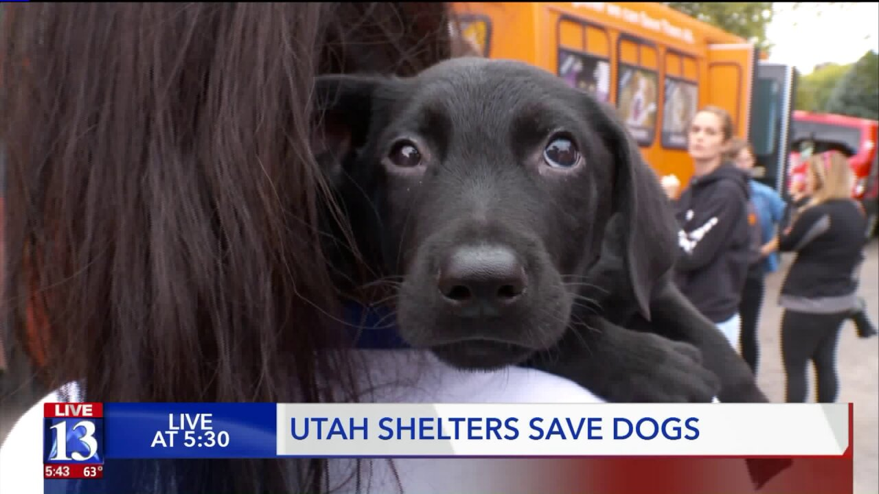 Utah animal shelters save dogs one busload at atime