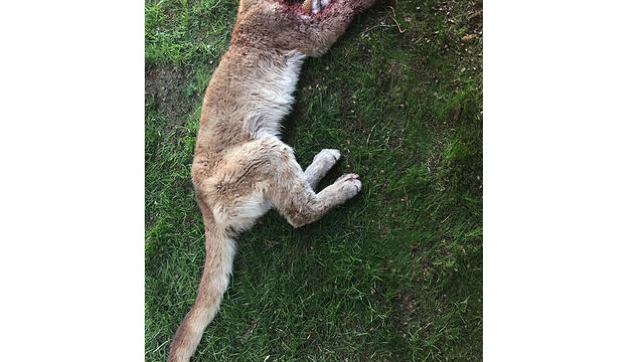 Boy attacked by mountain lion doing better