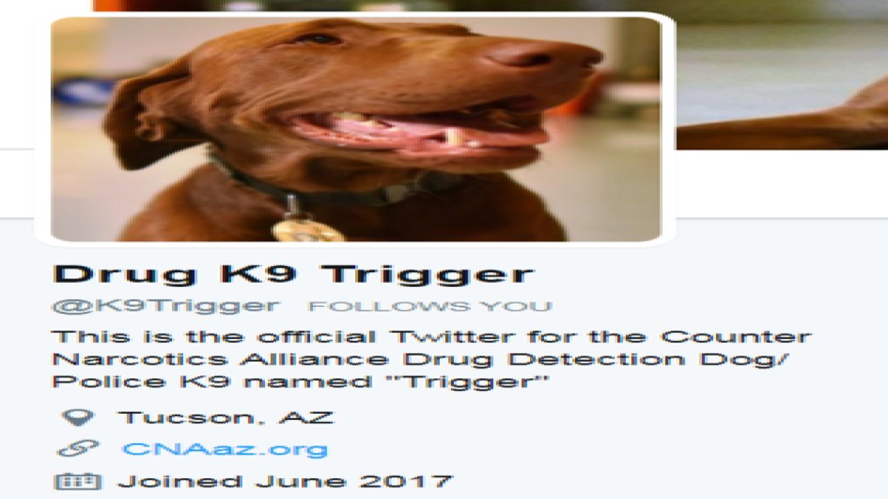 More potent drugs endanger police dogs