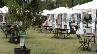 """On Sunday in Delray Beach, the city's Downtown Development Authority transformed Old School Square into a pop-up dining area that they call """"Distanced Dining in the Park."""""""