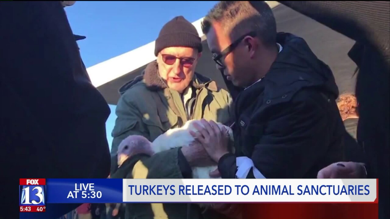 Animal rights activists, facing 60 years in prison, release turkeys to localsanctuaries